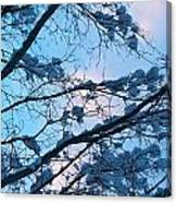Winter Sky And Snowy Japanese Maple Canvas Print
