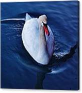 Winter Spin... Swan Style Canvas Print