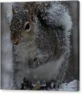 Winter Squirrel 1 Canvas Print