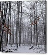 Winter Storm In The Forest Canvas Print