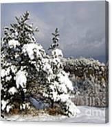 Winter Storm On Natural Bridge - D001598 Canvas Print