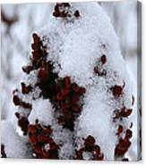 Winter Sumac Canvas Print