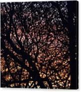 Winter Sunset Silhouette Canvas Print