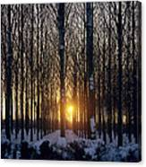 Winter Sunset Through The Trees Canvas Print