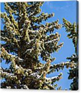 Winter Tale - Featured 3 Canvas Print