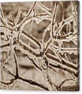 Winter Tangle Canvas Print