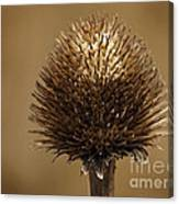 Winter Thistle Canvas Print