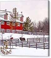 Winter Thoroughbreds Canvas Print