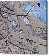 Winter Through Screen Canvas Print