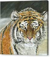 Winter Tiger Canvas Print