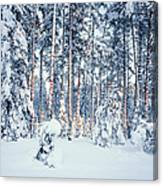 Winter Time In Forest Canvas Print