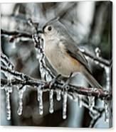 Winter Titmouse Canvas Print