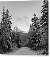 Winter Trail Through Trees Canvas Print