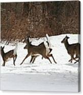 White Tailed Deer Winter Travel Canvas Print