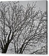 Winter Tree 6 Canvas Print
