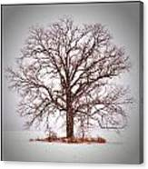 Winter Tree 8x10 Crop With White Bars Canvas Print