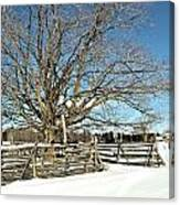 Winter Tree And Fence Canvas Print