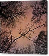 Winter Tree Canopy Canvas Print