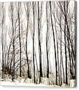 Winter Tree Fence 13283 Canvas Print
