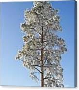 Winter Tree Germany Canvas Print
