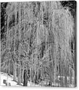 Winter Tree In Spokane - Black And White Canvas Print