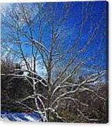 Winter Tree On Sky Canvas Print