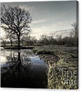 Winter Tree On The River Culm Canvas Print