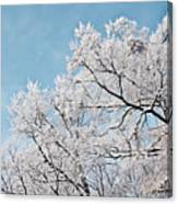 Winter Tree Scene Canvas Print