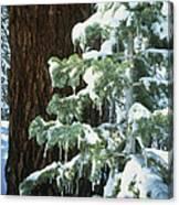 Winter Tree Sierra Nevada Mts Ca Usa Canvas Print