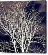 Winter Trees  2   Canvas Print