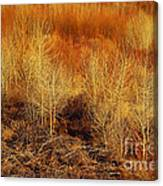 Winter Trees Color 3 Canvas Print