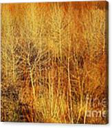 Winter Trees Color 4 Canvas Print