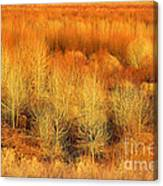 Winter Trees Color  7 Canvas Print