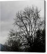 Winter Trees Number Four Canvas Print