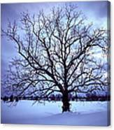 Winter Twilight Tree Canvas Print