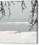Winter Under The Apple Tree Canvas Print