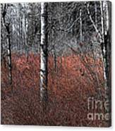 Winter Wetland I Canvas Print