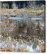 Winter Wetlands Of Alabama Canvas Print
