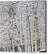 Winter White Trees Canvas Print