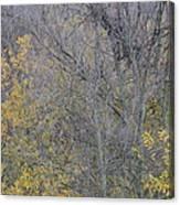 Winter Willows II Canvas Print