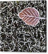 Winter With Frosted Leaf On Frozen Grass Canvas Print