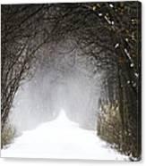 Winter Wonder Snow Tunnel Of Trees Canvas Print