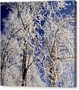 Winter Wonderland 7 Canvas Print
