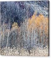 Winter Woodland  Canvas Print