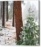 Winter Woodland Pine Tree Canvas Print