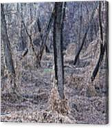 Winter Woods In Missouri 1 Canvas Print
