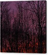 Winter Woods Sunset Canvas Print