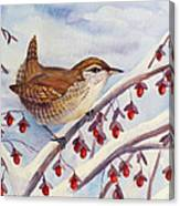 Winter Wren Canvas Print