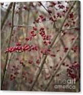 Winterberries Squared Canvas Print
