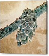 Wintercone Canvas Print